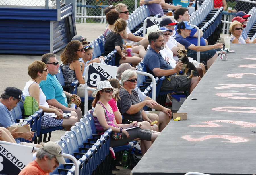 Fans (and a few dogs thanks to a promotional night) watch the Batavia Muckdogs during a New York-Penn League game this summer. The team's attendance is rated the worst in the growing league. (Harry Scull Jr./Buffalo News)