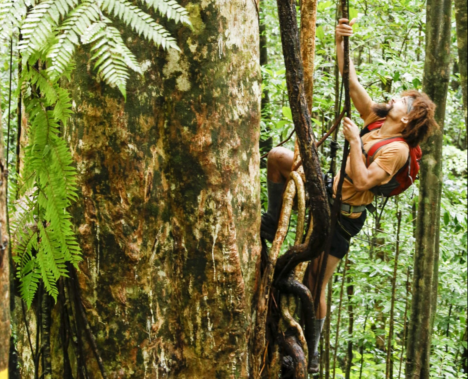 Jeremy Guarino climbing the large tree on Discovery Channel's 'American Tarzan.'