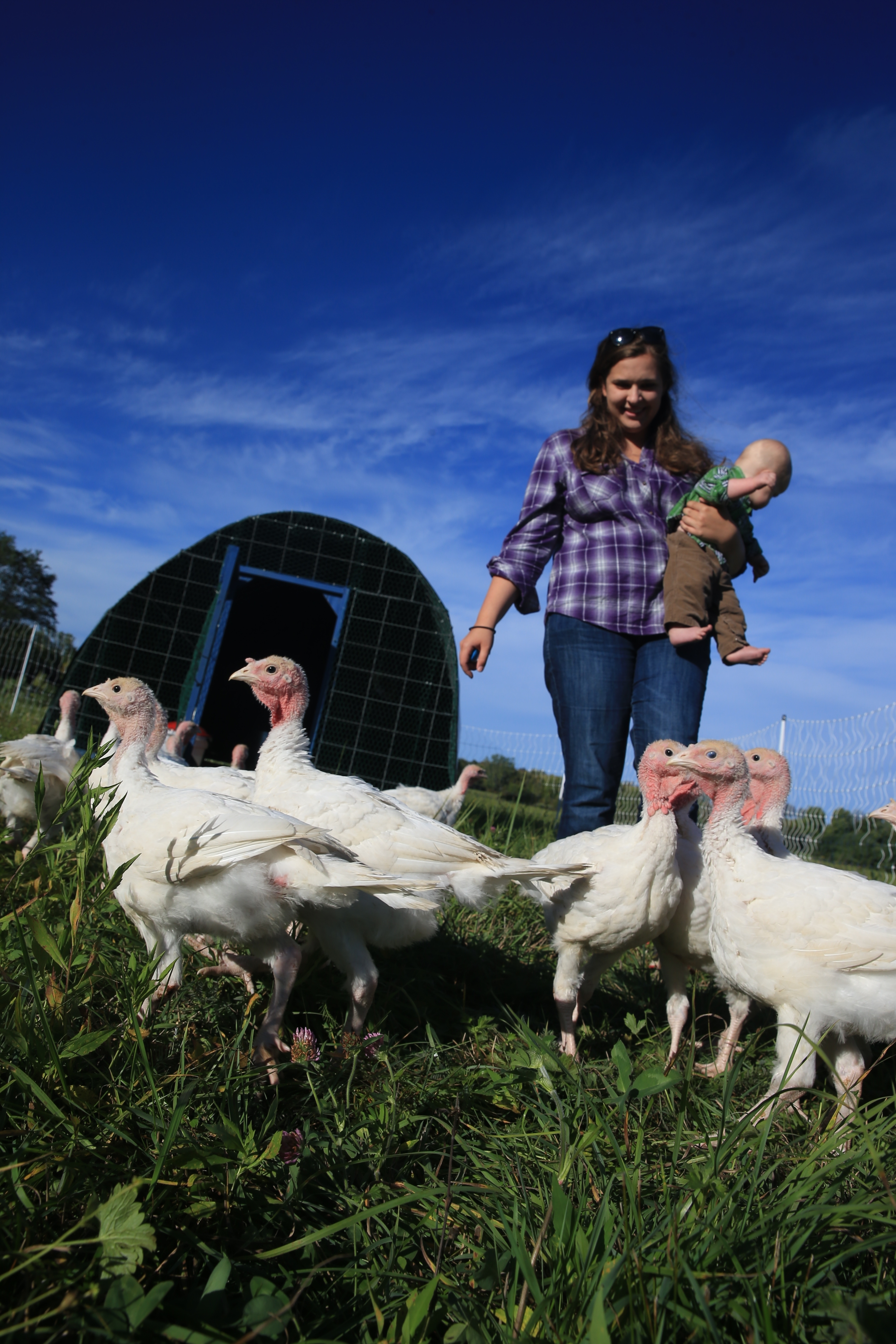 Jeweliet Phillips (CQ), and her son John, tend to the animals on a farm where they raise eggs, chickens, and turkeys, you may buy the fowl from her farm through meatsuite.com, Phillips feeds grain to the birds on her farm every morning at her farm in Lancaster, N.Y. on Wednesday Sept. 28, 2016. (John Hickey/Buffalo News)