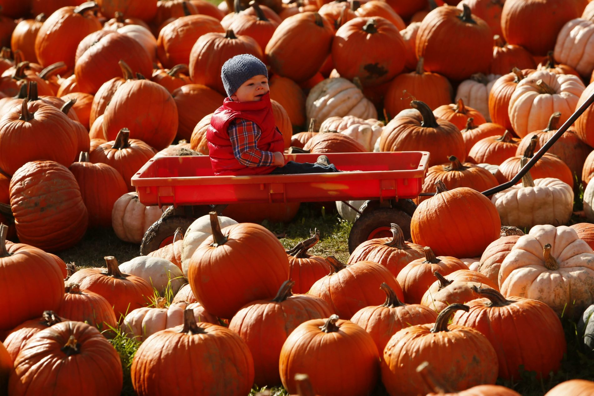 Western New York's many pumpkin patches deliver quality experiences. (Derek Gee/Buffalo News)