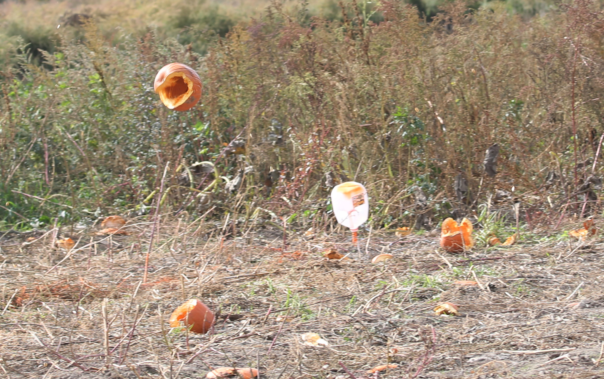 A pumpkin shot by Nichols students bounces into the field after landing more than 100 feet out. (Sharon Cantillon/Buffalo News)