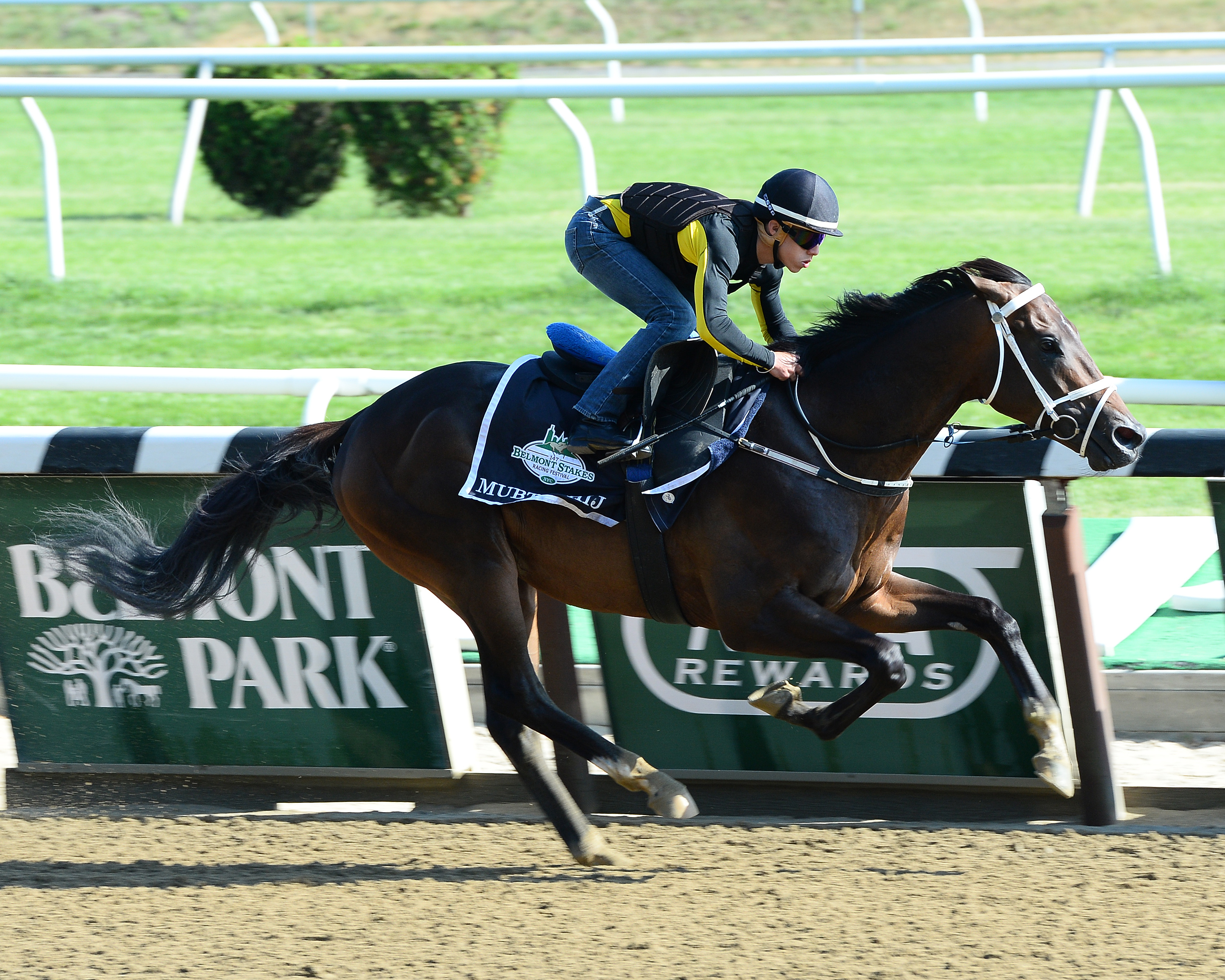Mubtaahij tackles Jockey Club Gold Cup at Belmont on Saturday Photo Credit: Susie Raisher/NYRA
