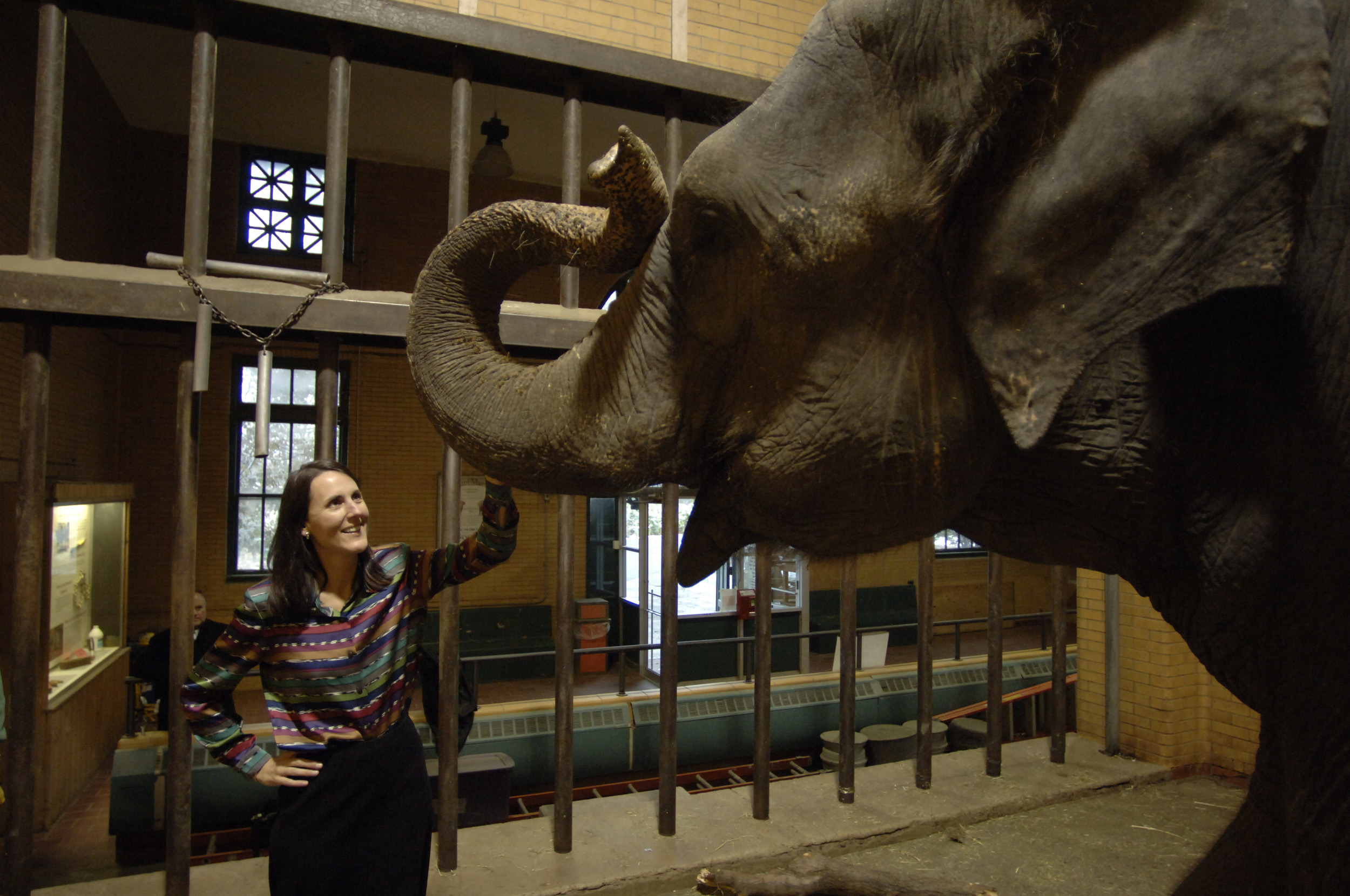 Donna Fernandes, president and CEO of the Buffalo Zoo, plays with Buki the elephant in 2005. (Harry Scull Jr./Buffalo News)