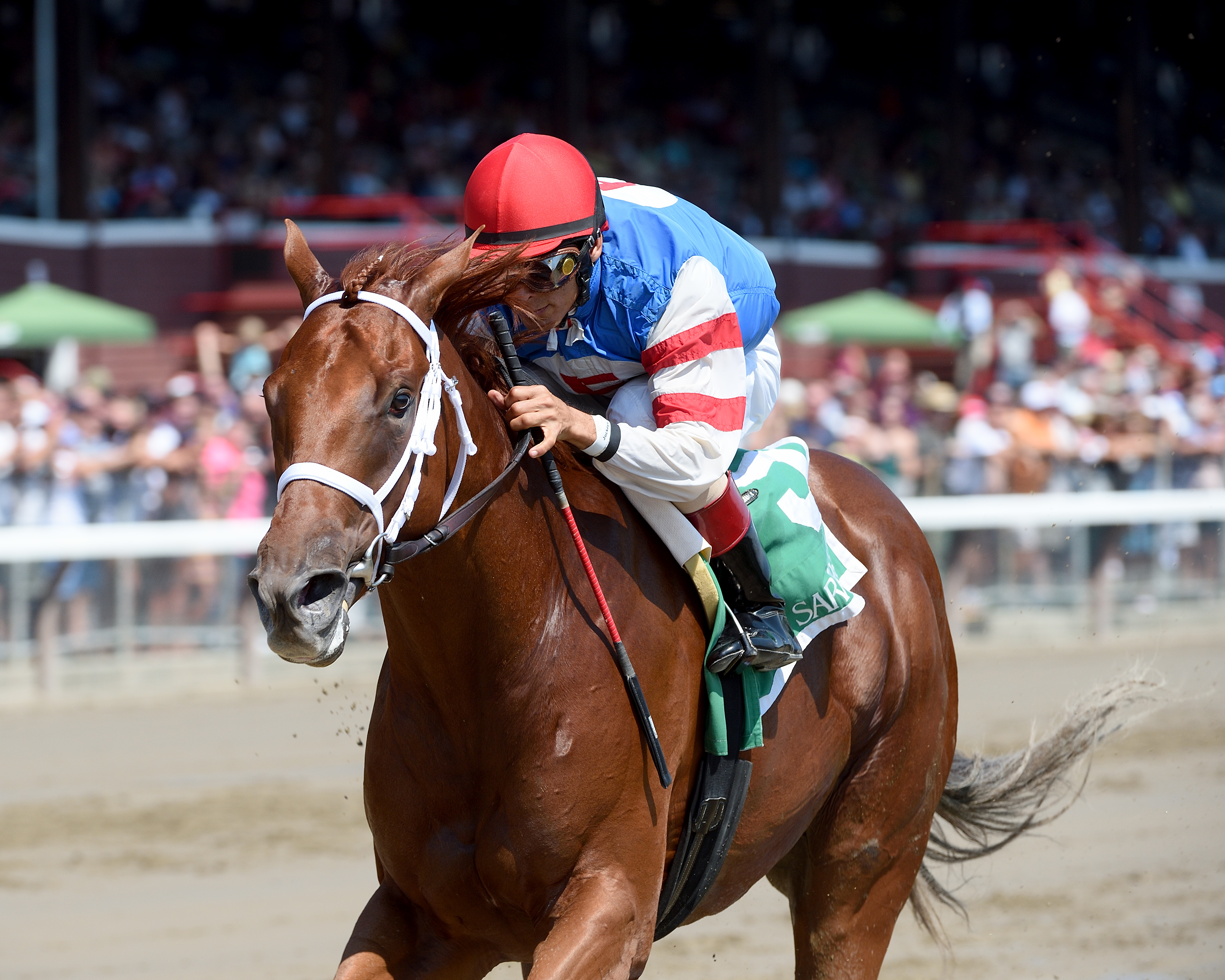 Syndergaard will head west looking to win the BC Juvenile. Photo Credit: Adam Mooshian/NYRA