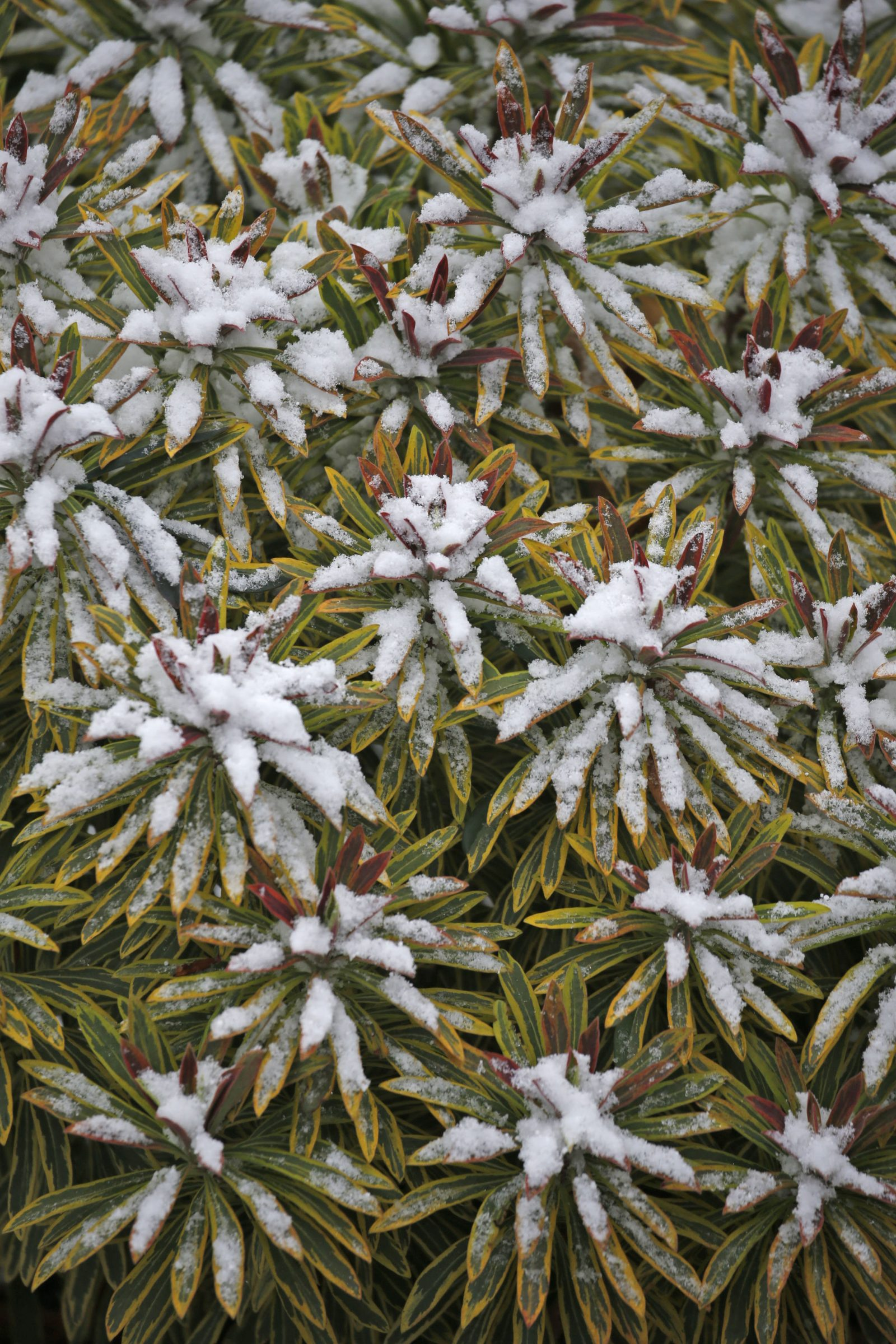 People around Western New York regions awoke to various amounts of snow Nov. 20. Here, snow dotted plants at Knox Farm State Park in East Aurora. (Robert Kirkham/Buffalo News)