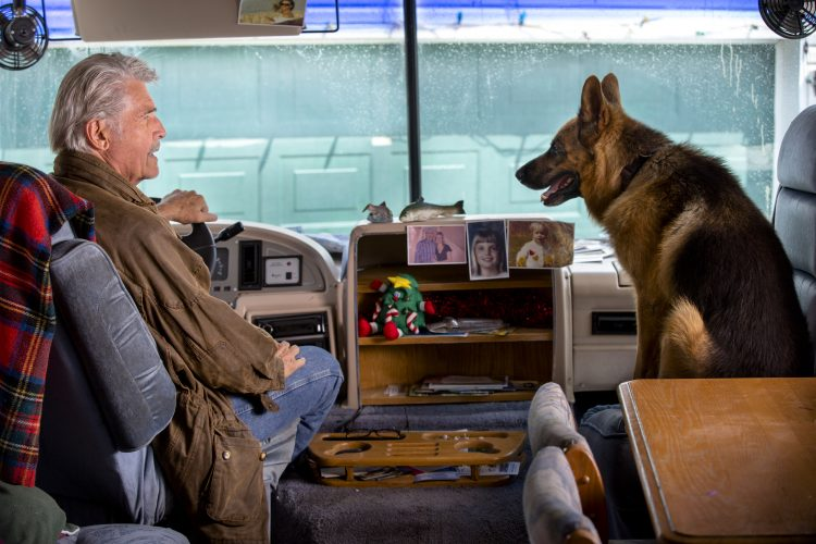 "James Brolin and Faras the Dog star in ""I'll Be Home For Christmas,"" new from Hallmark Movies & Mysteries. (Photo by Jasper Savage)"