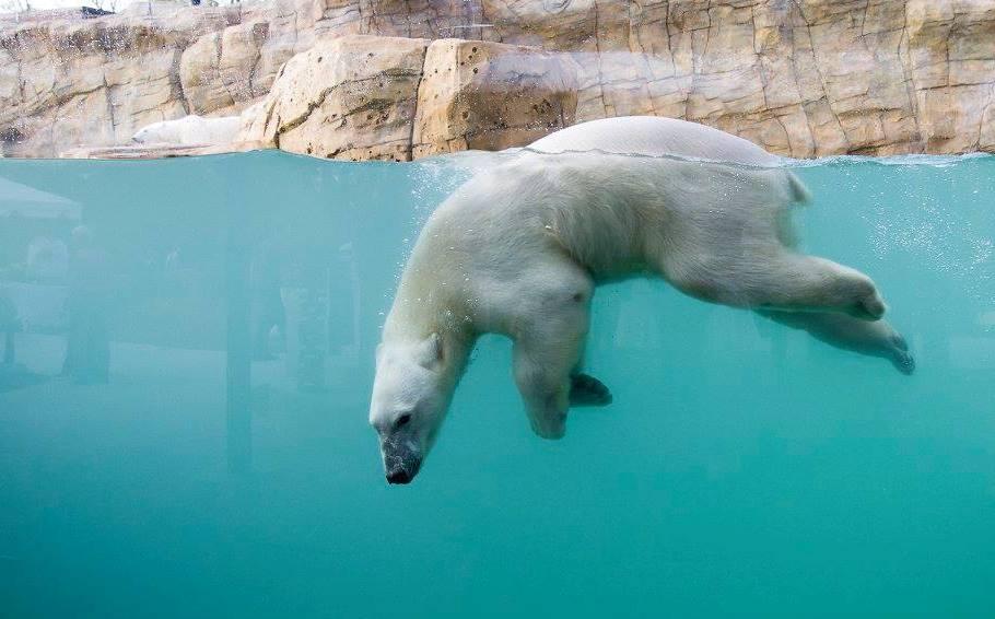 (Photo courtesy of the Buffalo Zoo)