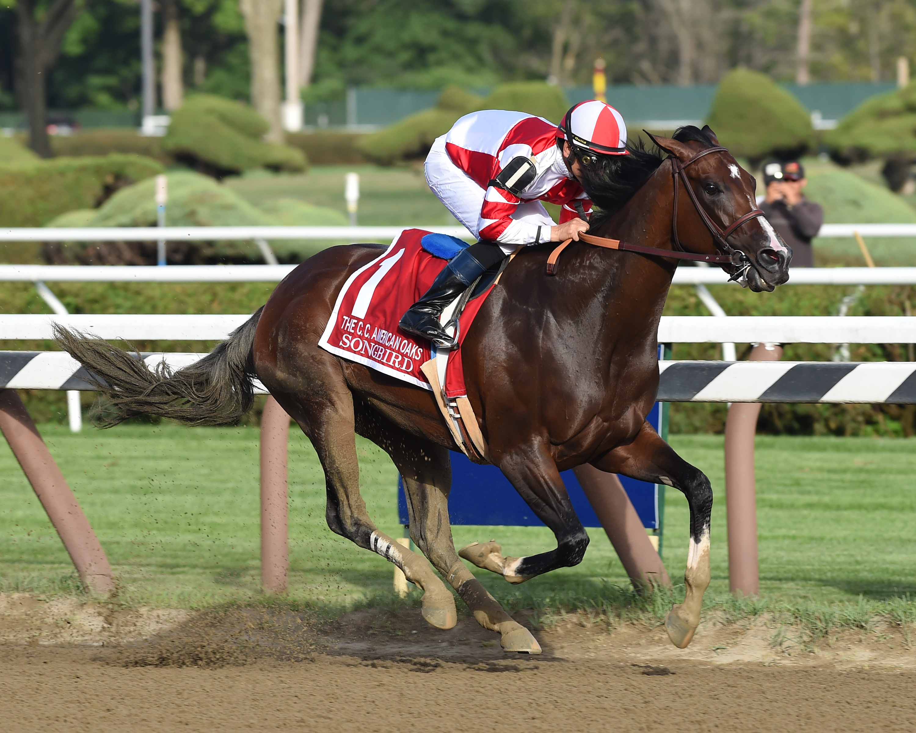 Songbird won twice at Saratoga in 2016  Photo Credit: NYRA