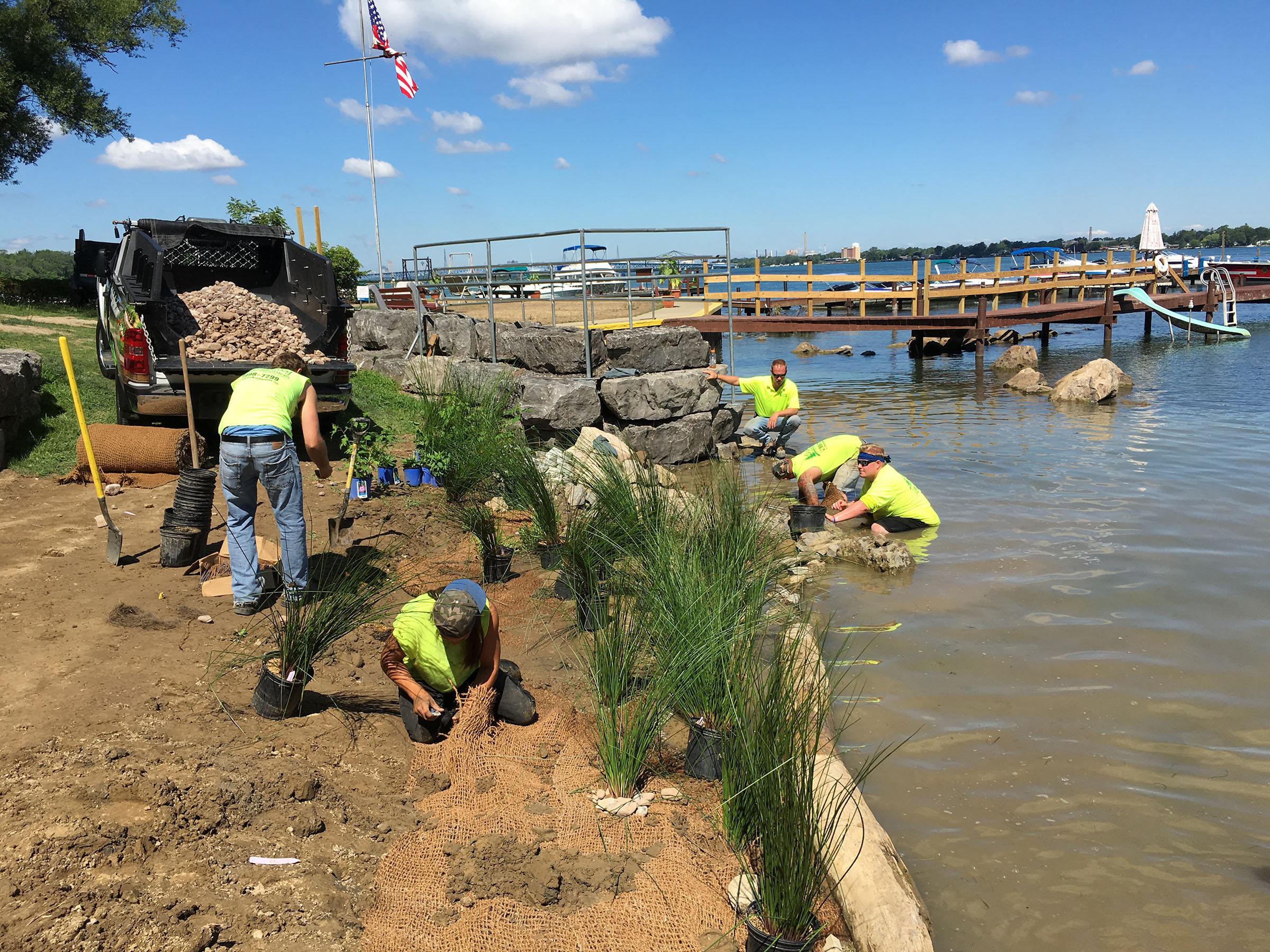 New vegetation planted at Sandy Beach Park Club is helping restore the Niagara River at Grand Island. (Photo from Buffalo Niagara Riverkeeper)