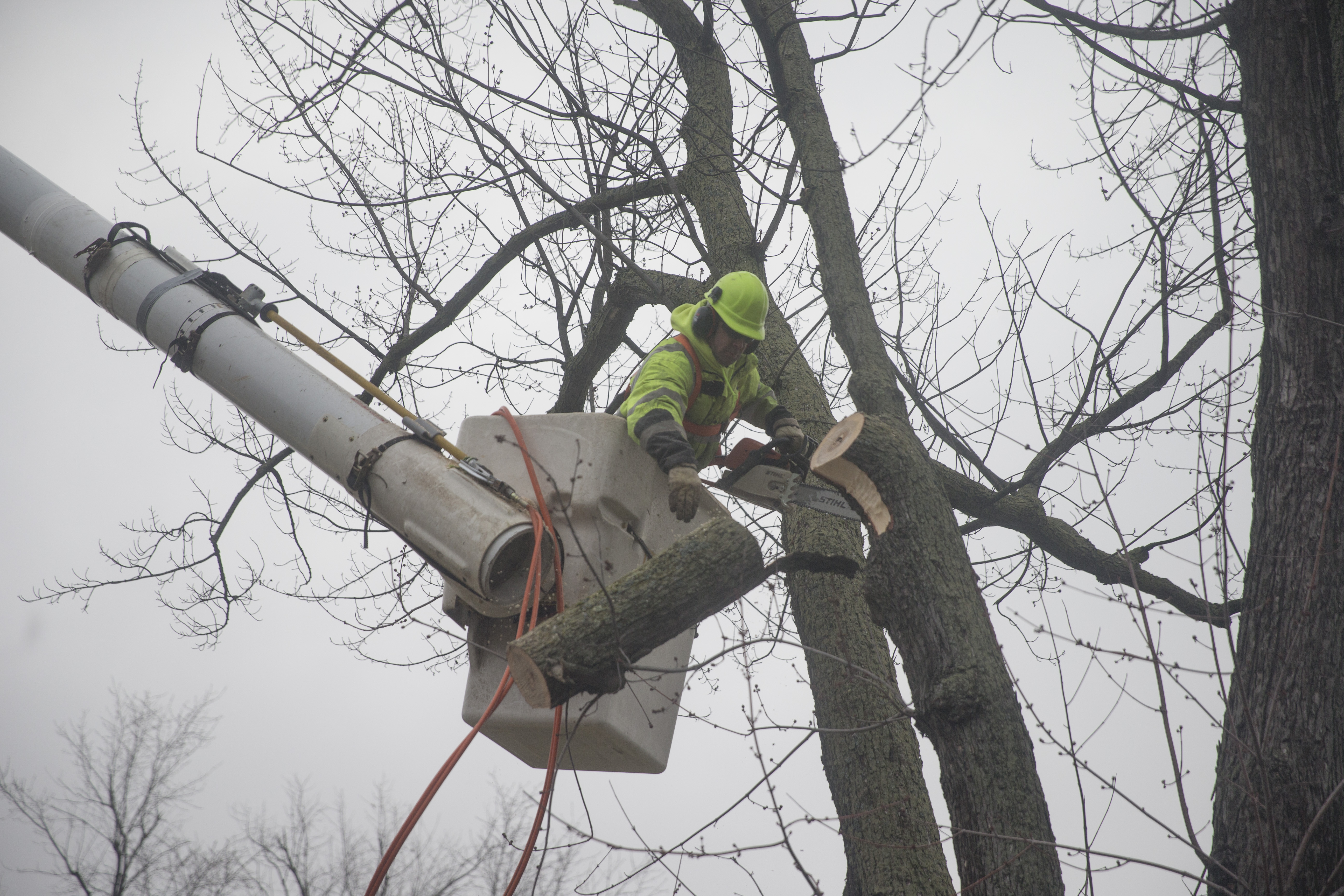 Town of Tonawanda Forestry Division worker Jason Orlando trims a large silver maple tree on Dorset Drive in the town on  Wednesday,  Jan. 25, 2017. (John Hickey/Buffalo News)