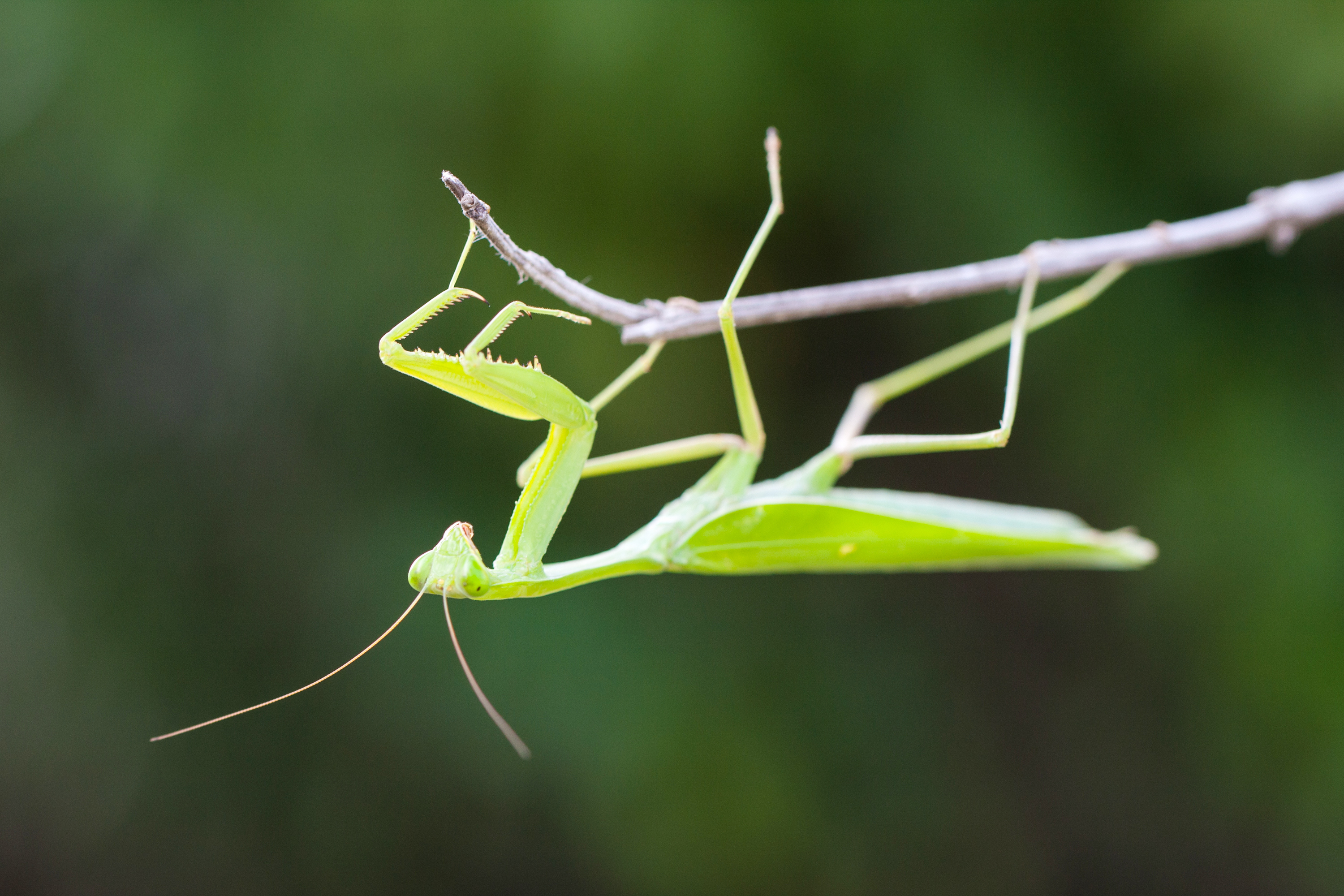 Insects in the garden will be discussed at the next meeting of the Hamburg Garden Club.