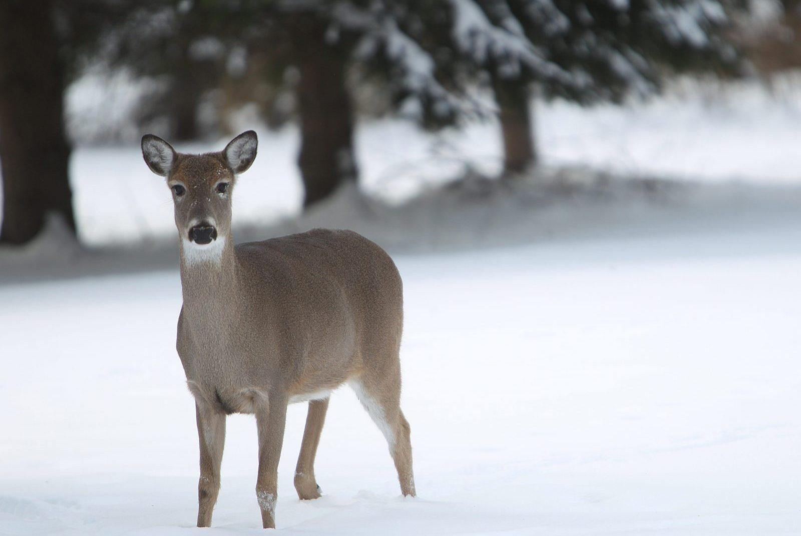 Hello visitor to the winter garden. (Sharon Cantillon/Buffalo News file photo)