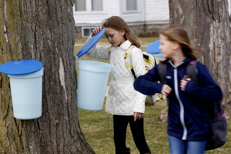 A sneak peek at springtime sweetness: maple-tapping in Attica