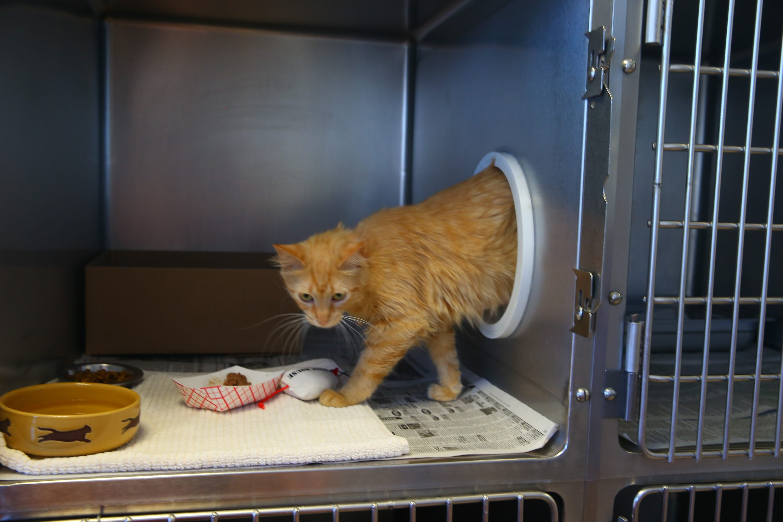 SPCA closes Tonawanda shelter Saturday for move to West