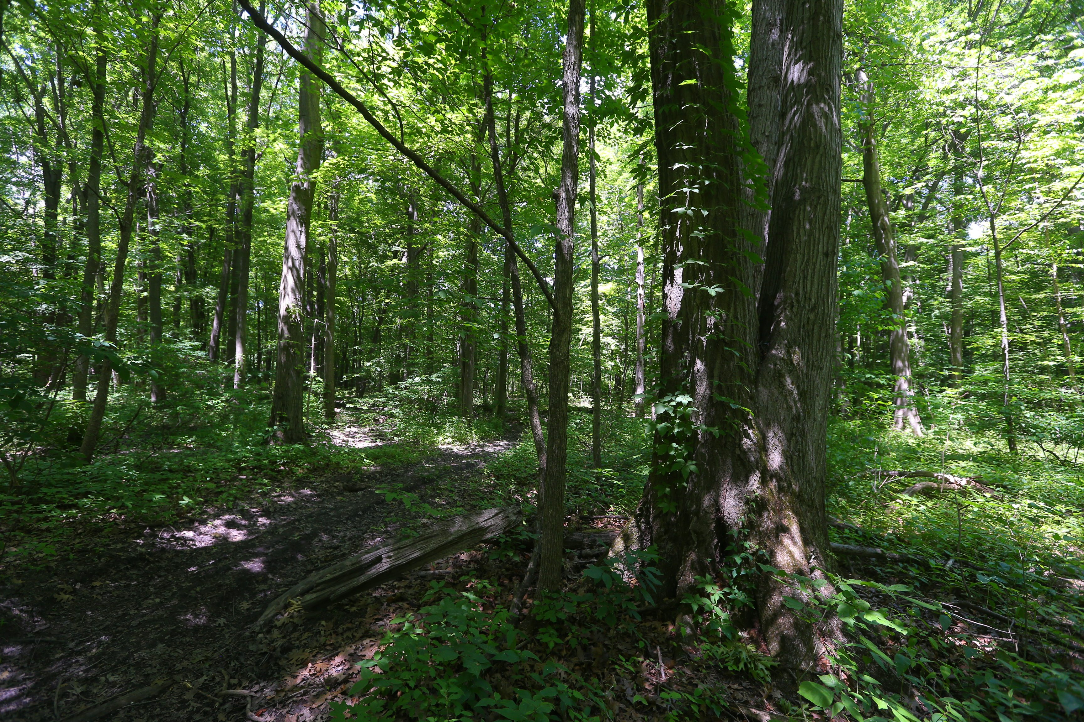 Nature View Park, a 1,254-acre park of forests, fields, creeks and trails, in Amherst, N.Y.,on Thursday June 30, 2016.  (John Hickey/Buffalo News)