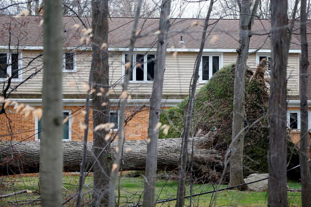 A huge oak tree lies on its side with its roots reaching almost to the second floor in the backyard of a house on Woodland Drive in Orchard Park Thursday, March 9, 2017.       (Mark Mulville/Buffalo News)