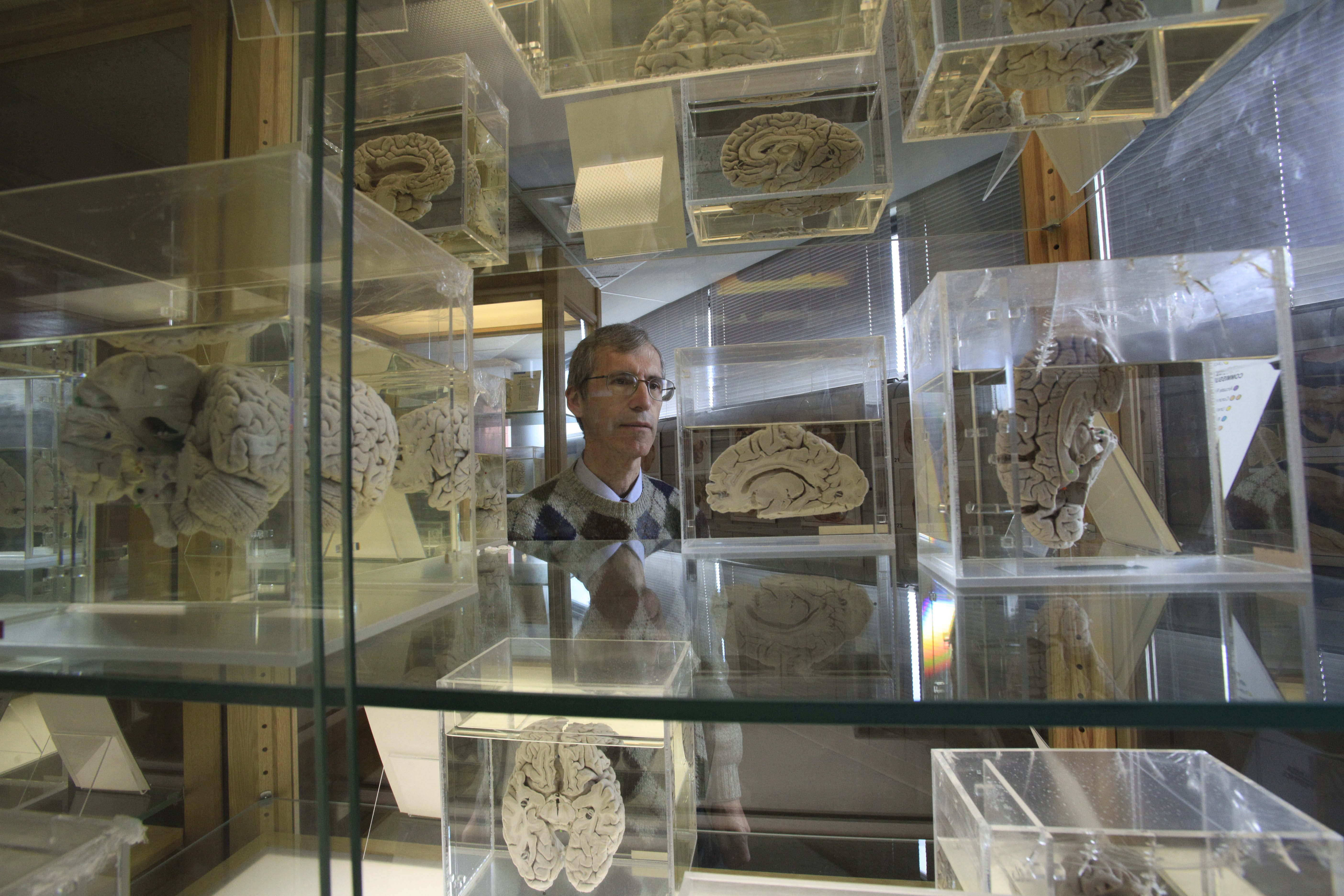 Dr. Chris Cohan, professor of pathology and anatomical sciences, runs the Museum of Neuroanatomy at UB.   (Derek Gee/Buffalo News file photo)