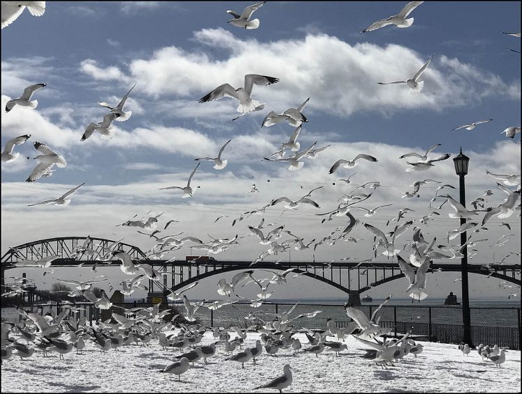 Taking flight: Gulls enjoy the sunshine in this photo with a view of the Peace Bridge from Broderick Park in Buffalo. (Cathaleen Curtiss/Buffalo News)