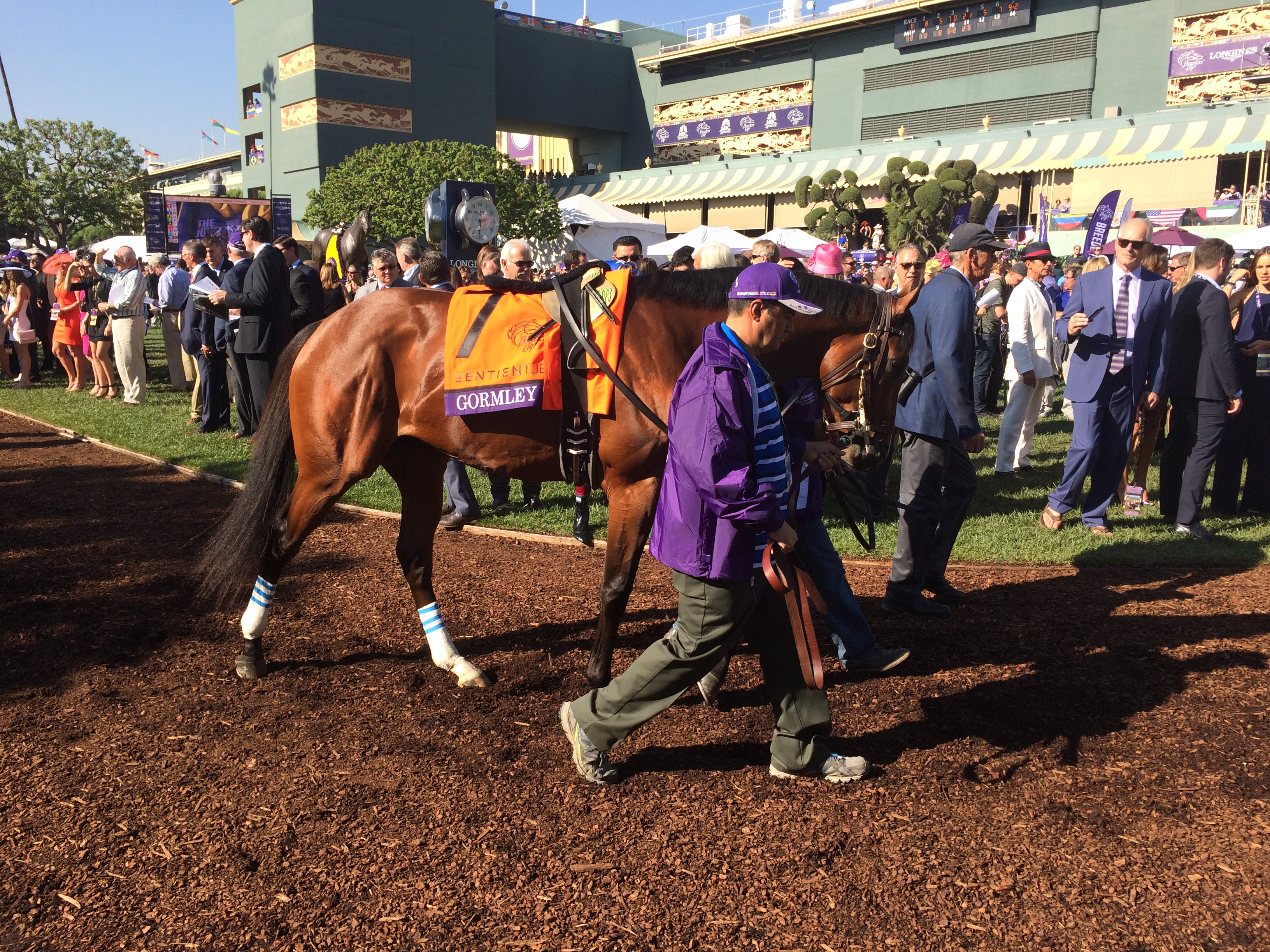 Gormley is the  9-2 second choice in the Santa Anita Derby on Saturday. Photo Credit: G Kershner
