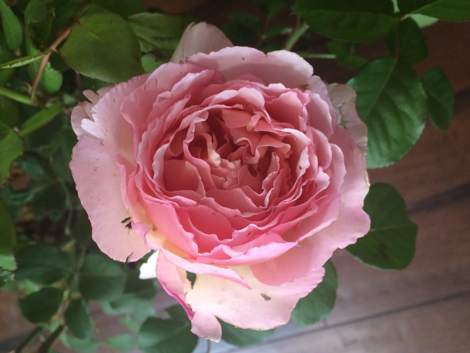 For moms: A perfect time for roses – The Buffalo News