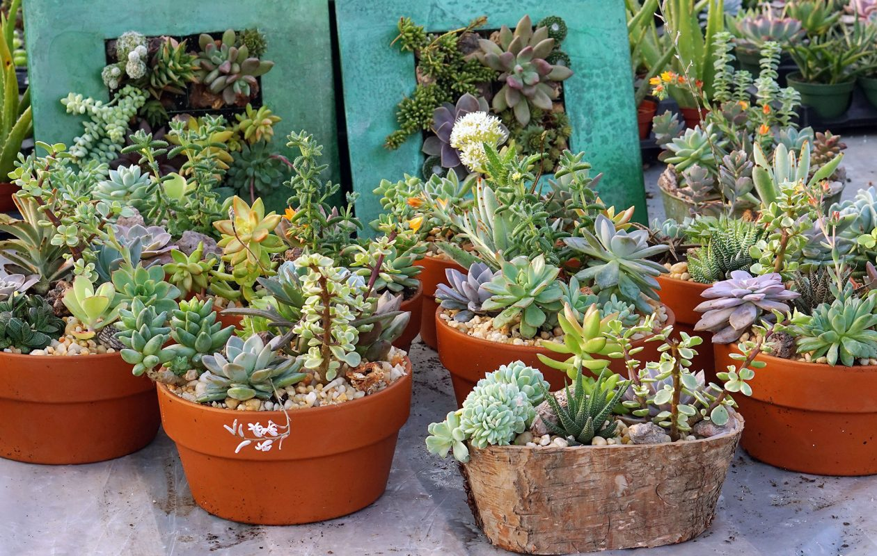 Potted succulents (these at Angle Acres Greenhouse in Orchard Part) add life to your home and are very easy to care for.