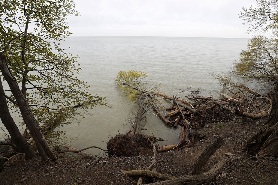Some trees on the banks of Lake Ontario at Old Fort Niagara in Youngstown have fallen into the water because of erosion. (Mark Mulville/Buffalo News)
