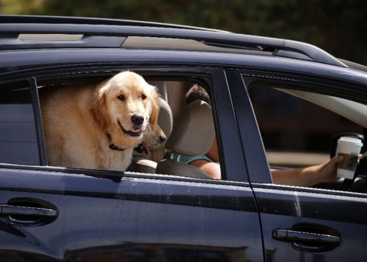 A dog takes a ride in the backseat of a car near Canalside on April 27. It was the first 80-plus degree day in Buffalo in four years. (Mark Mulville/Buffalo News)