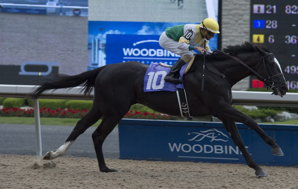Aurora Way will try and win the Plate in his third career race.  Photo Credit: WEG/michael burns photo