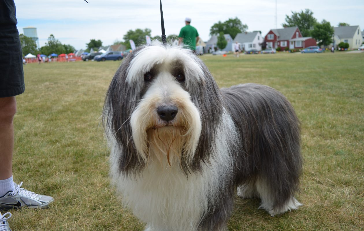 Dog Days of Kenmore will be held June 11 in Mang Park. (Photo courtesy of Kenmore Village Improvement Society)