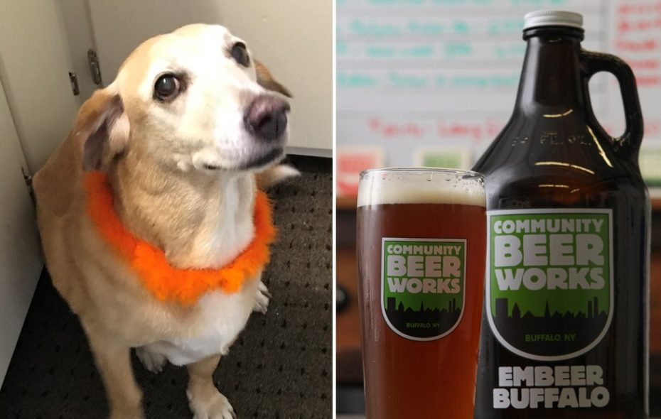 Community Beer Works will unveil its Dog Beer to raise money for Buffalo C.A.R.E.S. (Toni Ruberto/Buffalo News; Don Nieman/Special to The News)