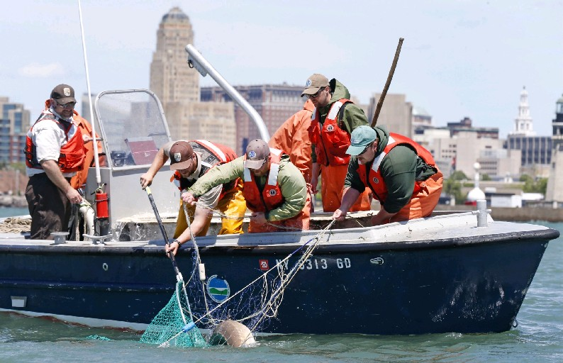The state Department of Environmental Conservation is teaming up with the U.S. Fish and Wildlife Service to research the ancient lake sturgeon in Buffalo Harbor. (Robert Kirkham/Buffalo News)