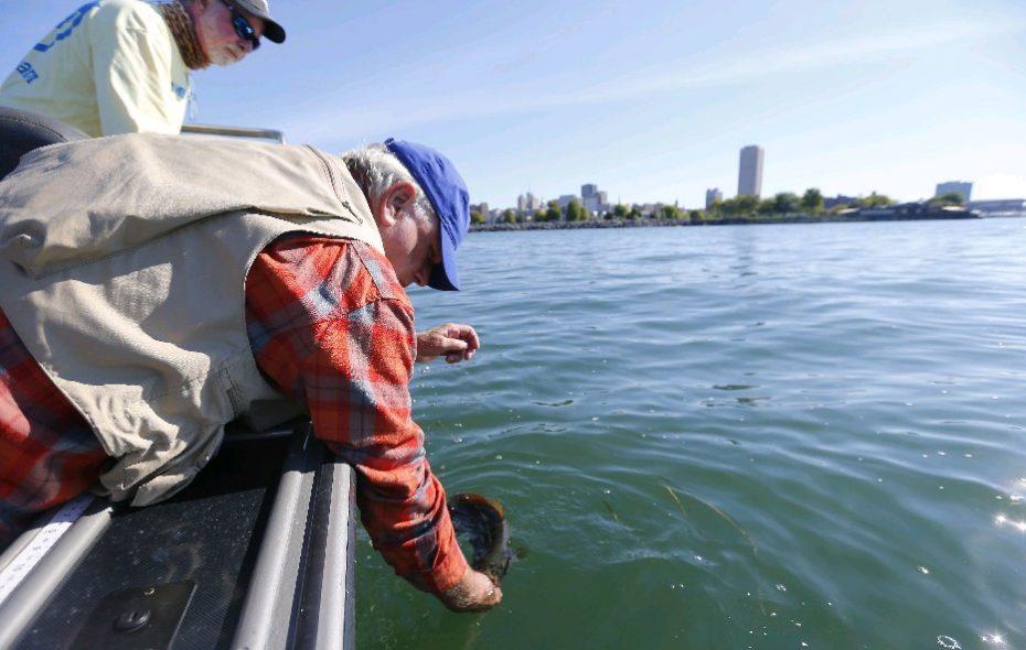 Buffalo's Bob Rich and charter captain Jim Hanley release a bass caught on Lake Erie last September. (Mark Mulville/Buffalo News)
