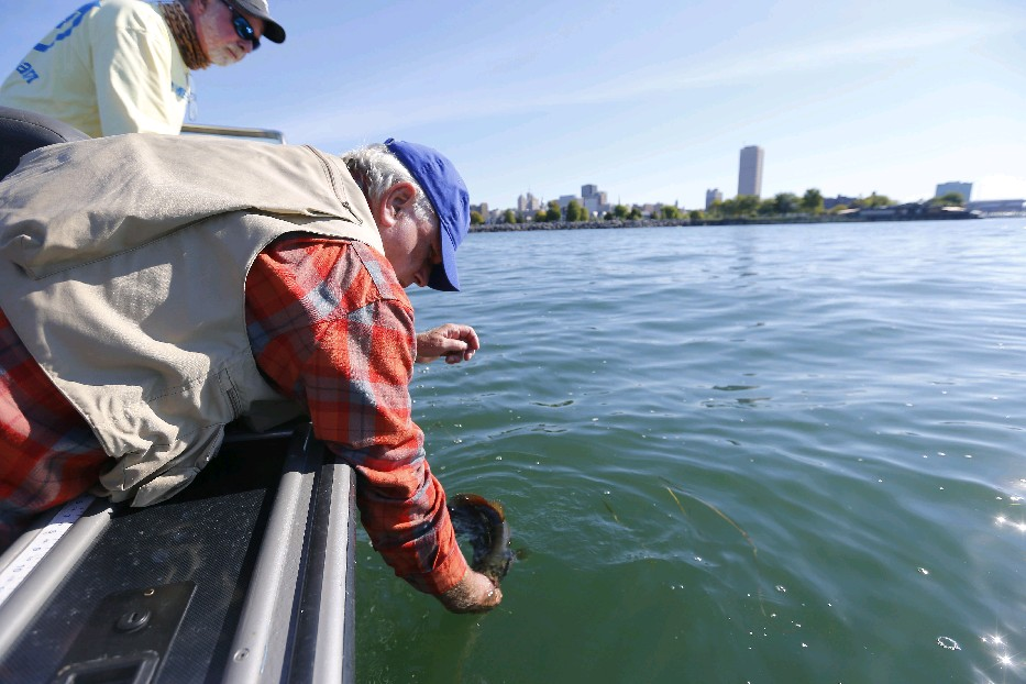 Buffalo's Bob Rich and charter captain Jim Hanley release a bass caught on Lake Erie last September. (Mark Mulville/Buffalo News)