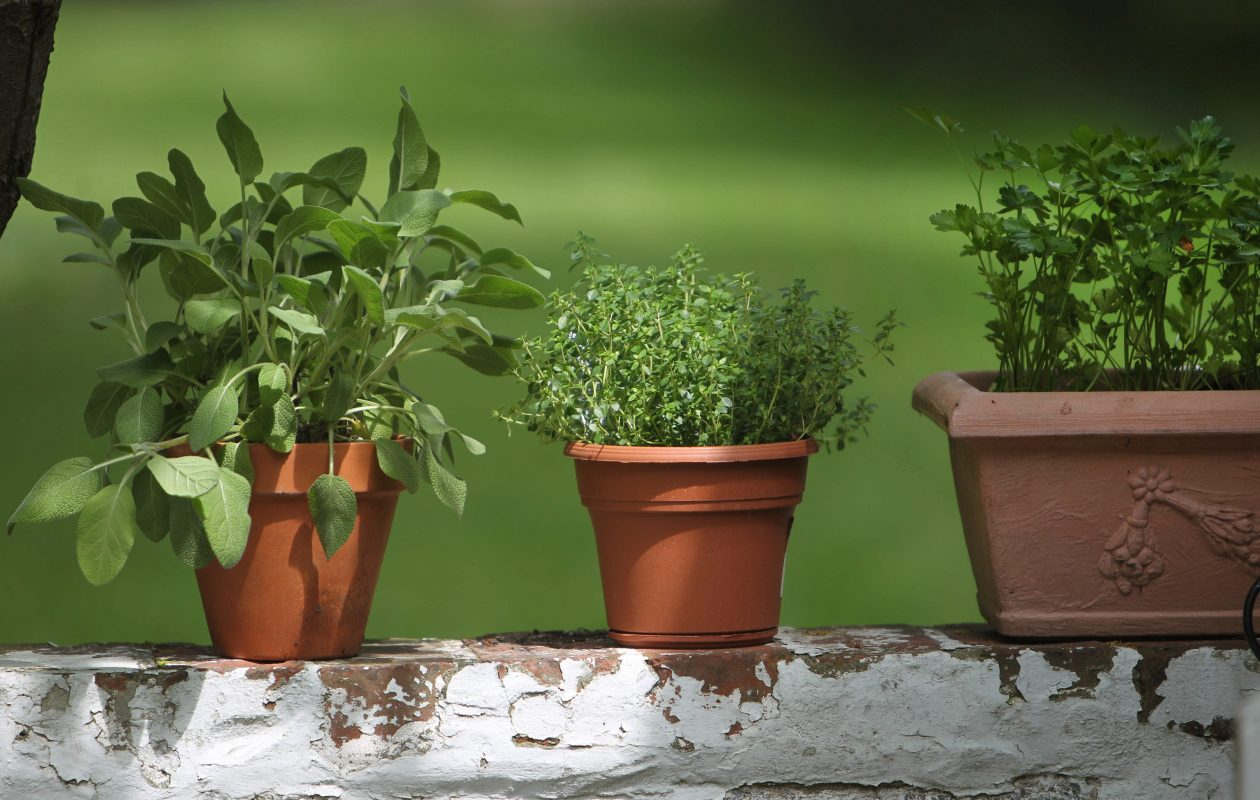 Buy and plant some herbs to enjoy all summer. (Sharon Cantillon/Buffalo News file photo)