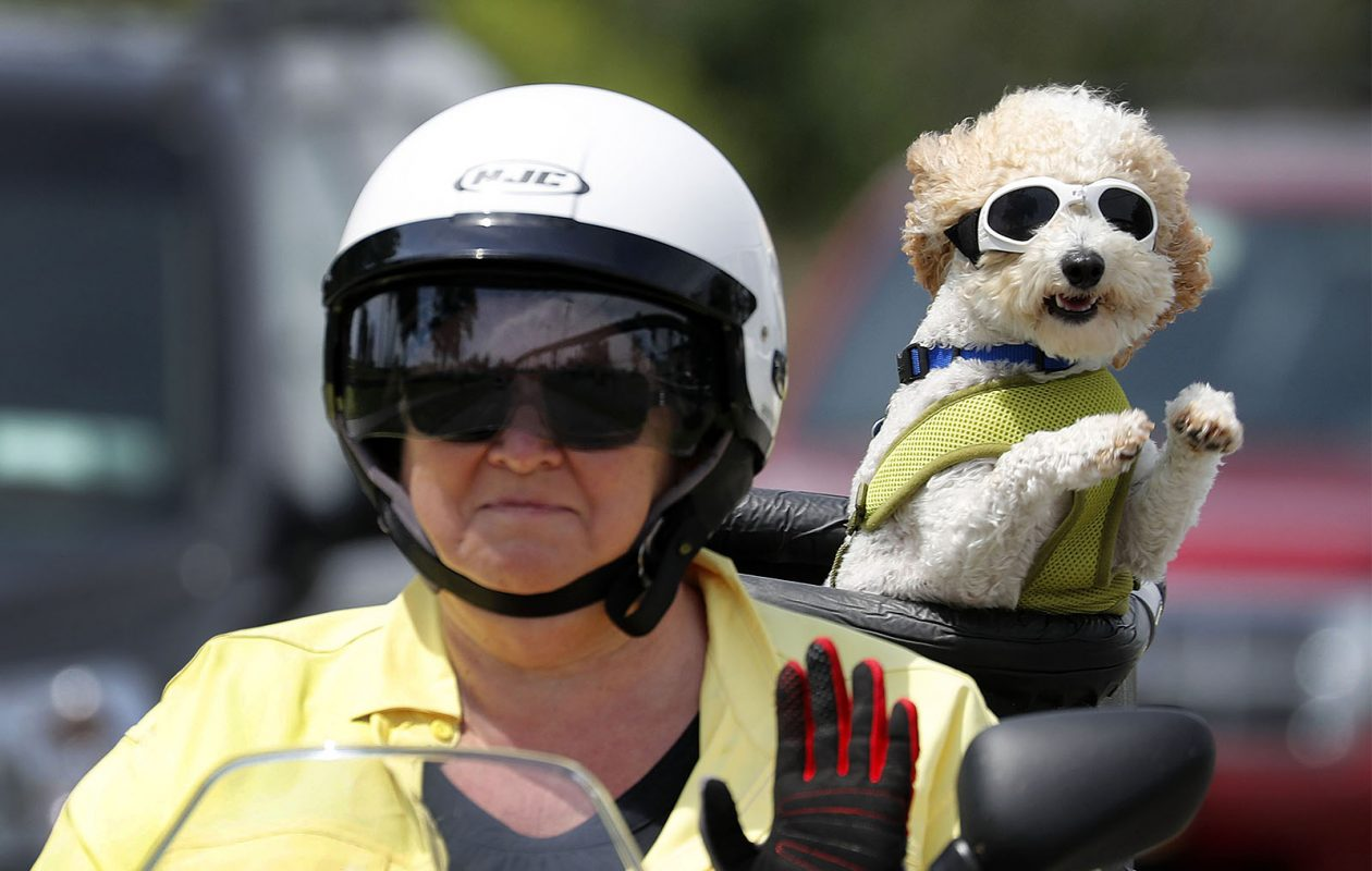 Donna McGuire and her dog Brad take a ride on their scooter along Fuhrmann Blvd in Buffalo Wednesday. (Mark Mulville/Buffalo News)