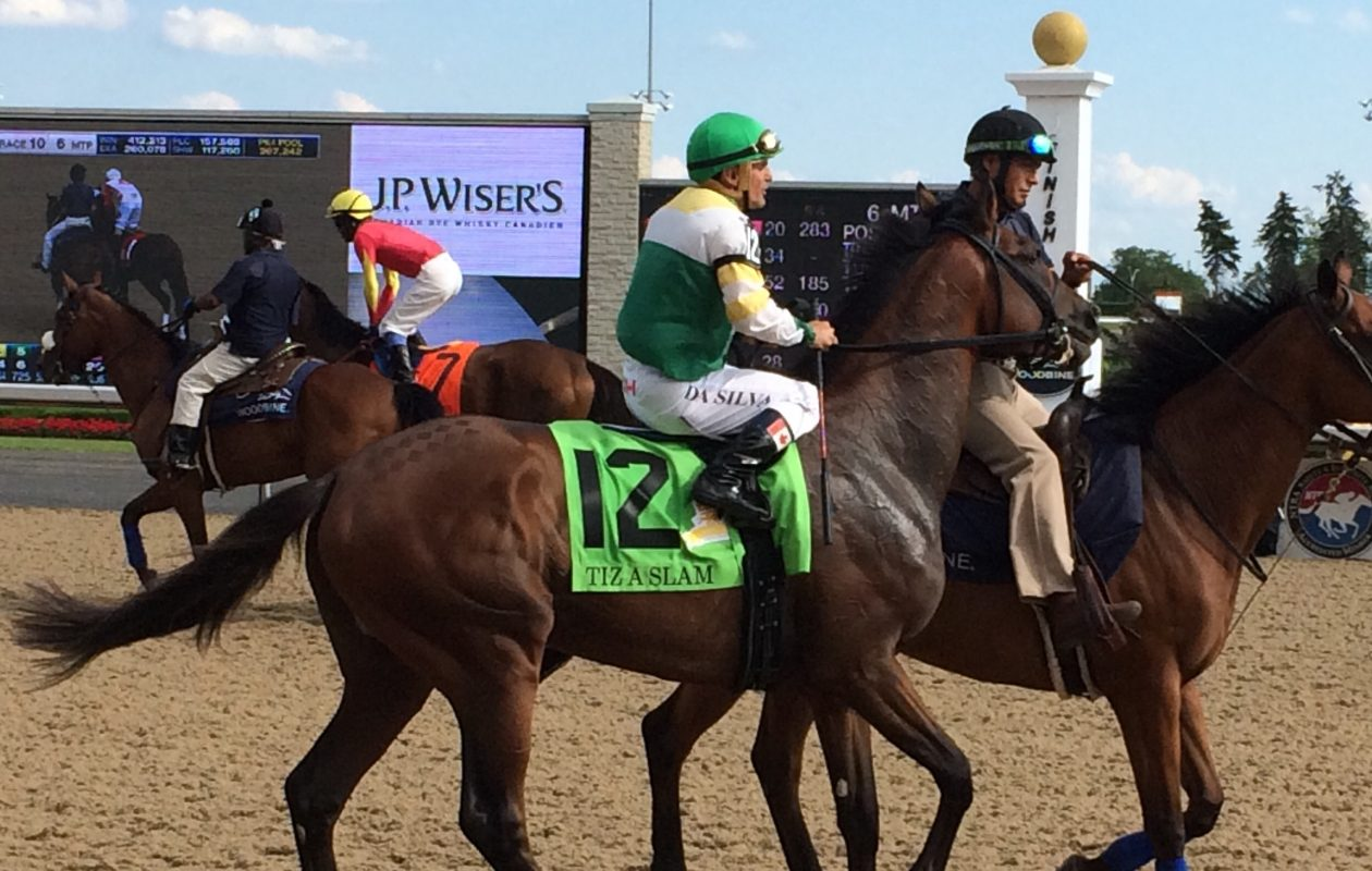 Tiz a Slam in the walking ring at Woodbine Racetrack before the Queen's Plate.
