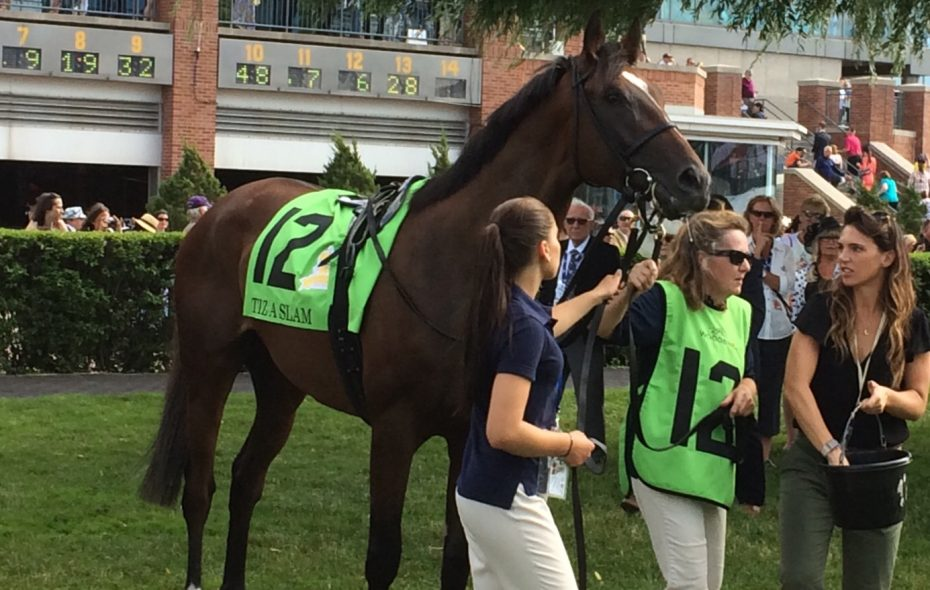 Tiz a Slam in the Woodbine walking ring before the Queen's Plate