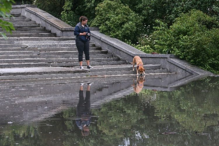 Dogs drinking from contaminated water sources can make them sick. New York Sea Grant and State Parks officials teamed up to help dog owners recognize toxic algal blooms to protect their pooches. (Buffalo News file photo)