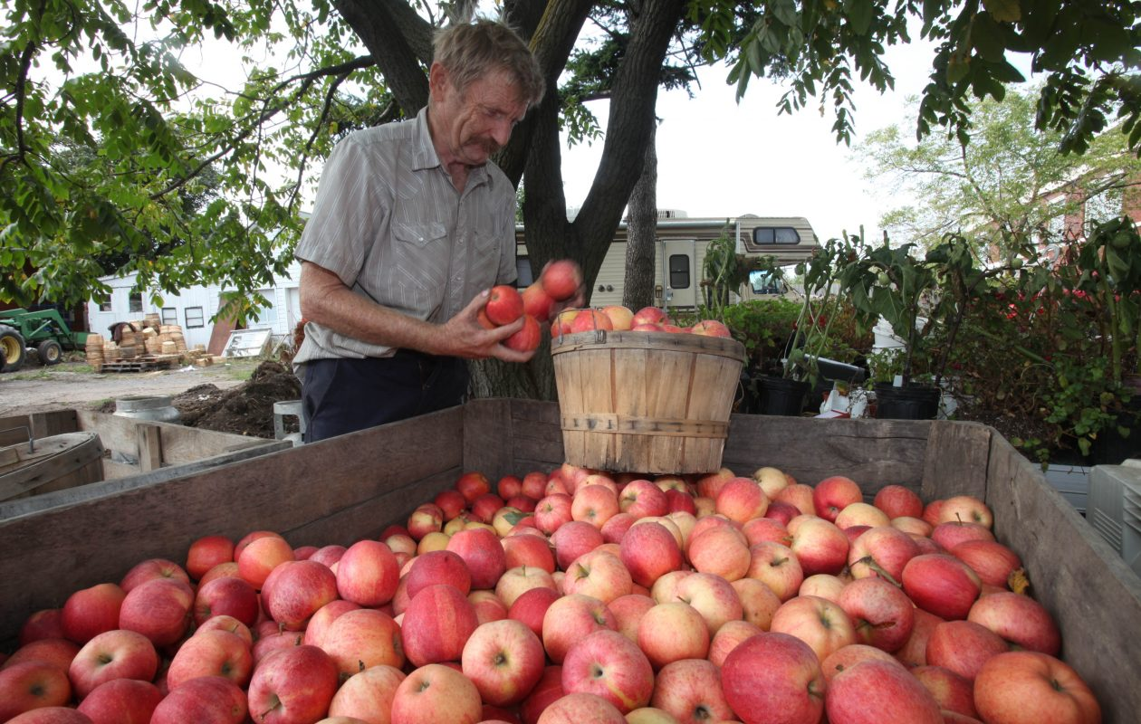 Gordon Rockwood sorts apples at George's Produce stand on Main Street in Amherst in 2010. (Robert Kirkham/Buffalo News file photo)