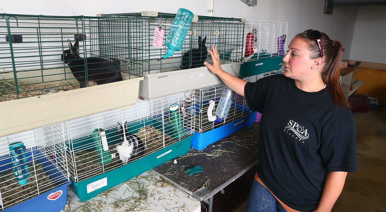 Lauren Zaninovich, a cruelty investigator for the SPCA of Niagara, stands by some of the 13 rabbits that were among the 343 animals confiscated from a Lockport home earlier this week. (John Hickey/Buffalo News)