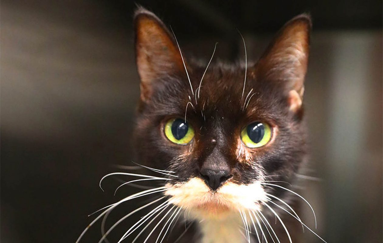 The Erie County Legislature is considering a new law that would shorten the time that rescue organizations must hold onto stray cats before they can be placed for adoption. (John Hickey/Buffalo News file photo)