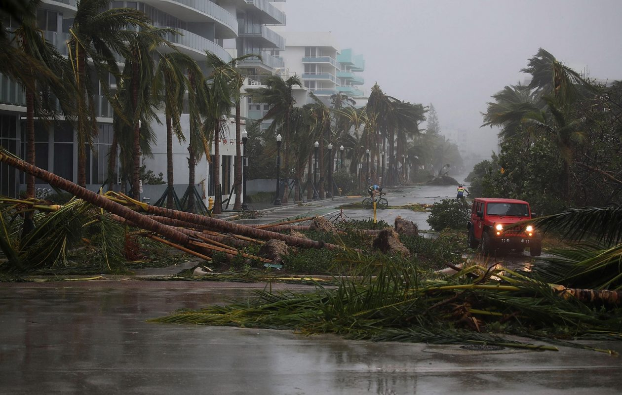 A vehicle passes downed palm trees and two cyclists attempt to ride as Hurricane Irma passed through the area on Sunday. (Joe Raedle/Getty Images)