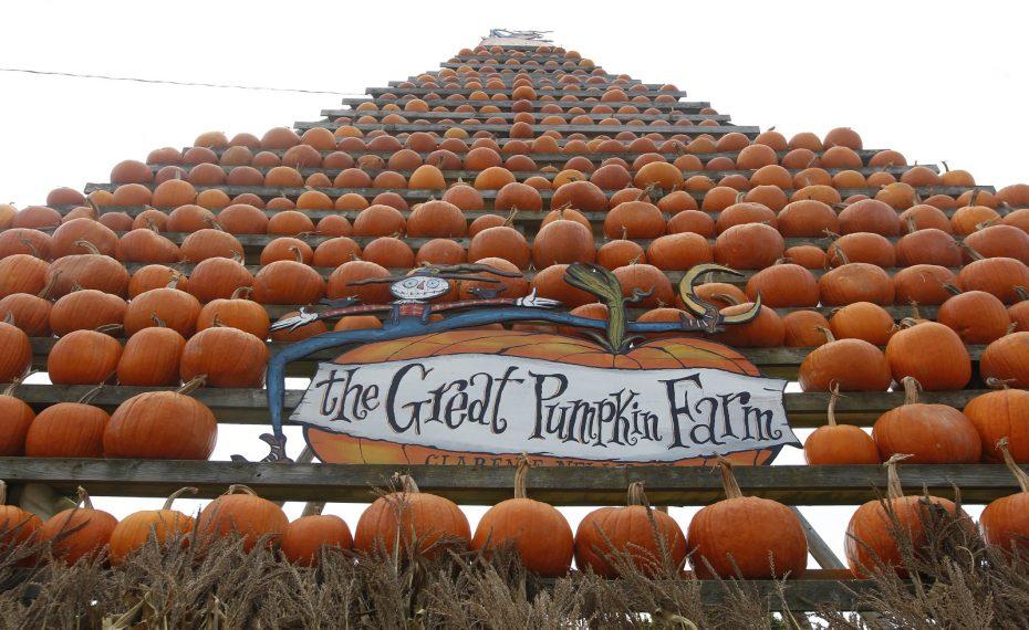 Ryan Errico, 3, of Amherst, has fun climbing around the pumpkins at the Great Pumpkin Farm. (Sharon Cantillon/Buffalo News)