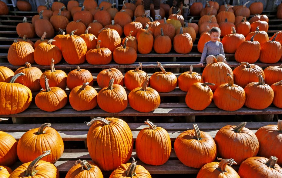 Liam O'Hara, 3, of West Seneca, is in the crowd of pumpkins at the Great Pumpkin Farm in Clarence.  (Robert Kirkham/Buffalo News)