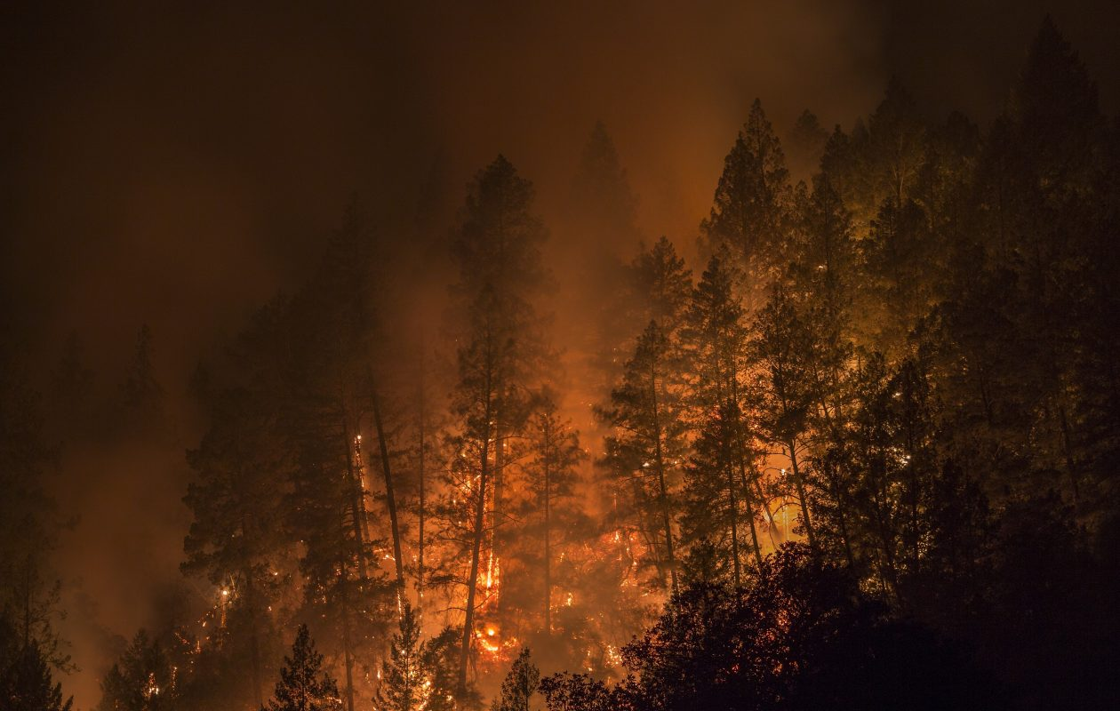 Wildfire creeps through the forest, down the south side of Dry Creek Canyon, at the Partrick Fire west of Napa, Calif. Thousands of homes have burned, at least 31 people confirmed killed with hundreds still missing as California wildfires continue to spread out of control.   (Getty Images)