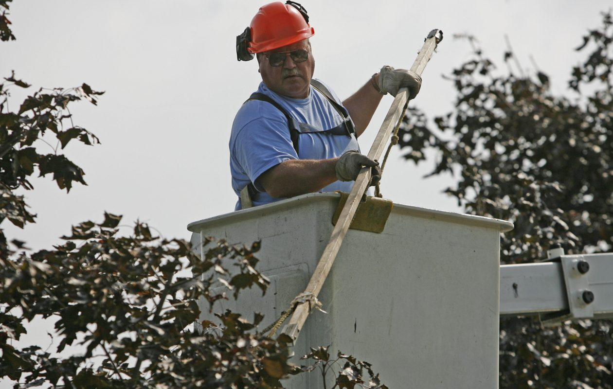 Mark Lubera, the Town of Lancaster parks crew chief, trims a crimson king maple tree on Crane Street in Lancaster in this file photo from Sept. 25, 2008. (Derek Gee / The Buffalo News)