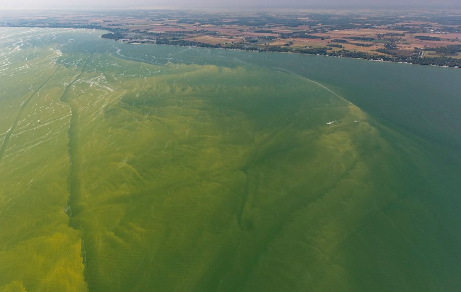 A harmful algal bloom near Toledo, Ohio, last September. (Photo courtesy of the Great Lakes Environmental Research Laboratory and Aerial Associates Photography, Inc.)