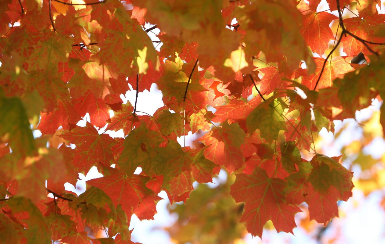 The City of Niagara Falls is urging residents to bag their leaves due to the early snowfall. (Sharon Cantillon / News file photo}