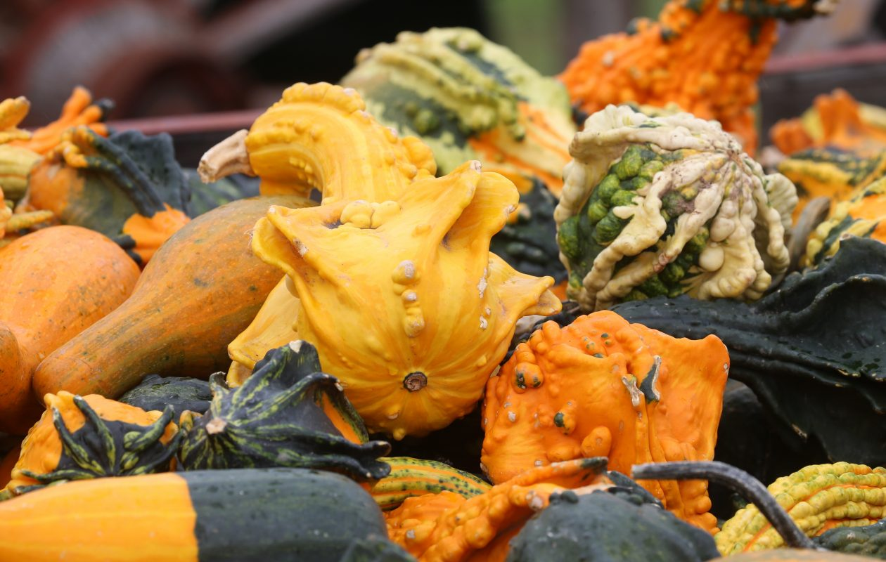 Gourds have a long history and many uses and are well worth growing. (John Hickey/News file photo)