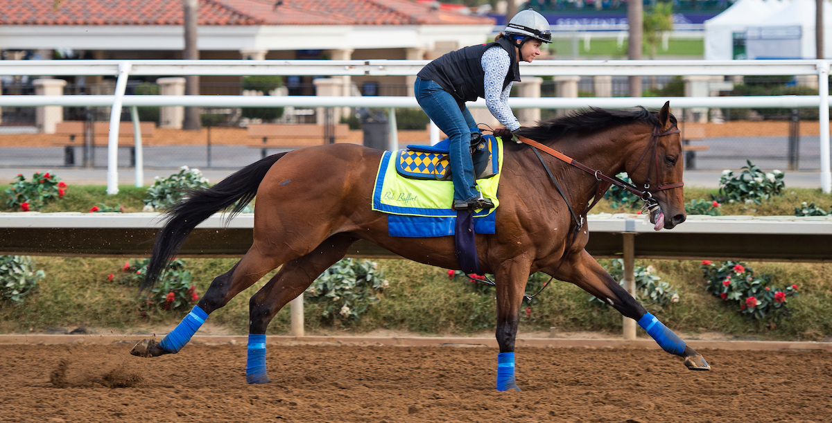 DEL MAR, CA: West Coast trained by Bob Baffert, exercises in preparation for Breeders' Cup Classic at Del Mar Thoroughbred Club (Photo by Anna Purdy/Eclipse Sportswire/Breeders Cup)